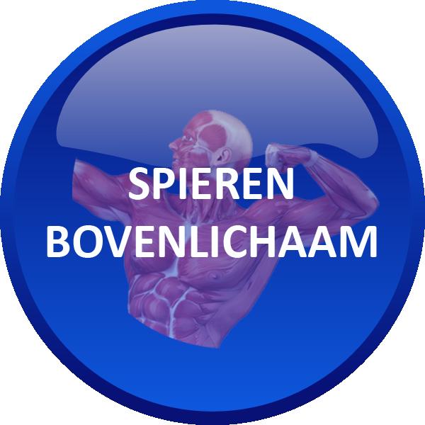 SPIEREN BOVENLICHAAM